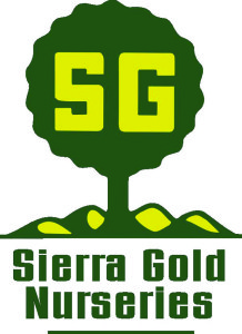 sgn-logo-tree-color